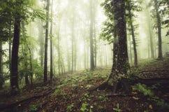 Bosque verde de la fantasía con niebla fotos de archivo