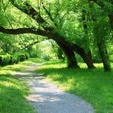 Bosque verde de la primavera con la pequeña trayectoria Fotos de archivo