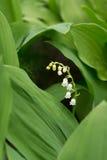 Bosque verde de la primavera en rayos del sol imágenes de archivo libres de regalías