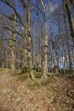 Bosque verde de la primavera en rayos del sol Imagenes de archivo