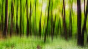 Bosque verde de la primavera en rayos del sol Fotos de archivo
