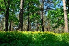 Bosque verde de la primavera en rayos del sol Foto de archivo
