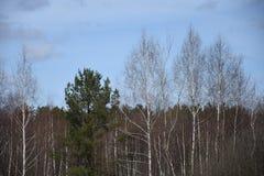 Bosque verde de la primavera en rayos del sol Foto de archivo libre de regalías