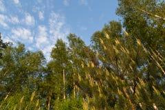 Bosque verde de la primavera y cielo azul con las nubes Fotografía de archivo libre de regalías