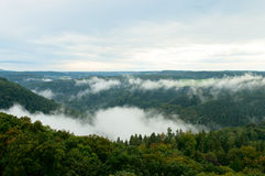 Bosque verde de niebla en una cuesta de montaña Fotos de archivo libres de regalías