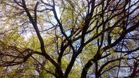 Bosque verde del momento del pedazo del árbol Imagen de archivo libre de regalías