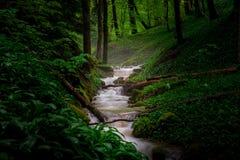 Bosque verde del resorte Foto de archivo libre de regalías