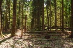Bosque verde del verano Fotos de archivo