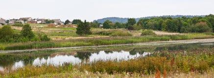 Bosque verde del verano Foto de archivo