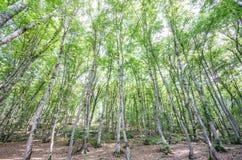Bosque verde en día brillante fotografía de archivo