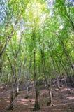 Bosque verde en día brillante fotos de archivo