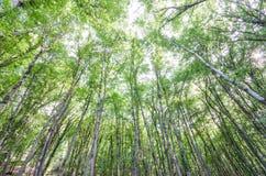 Bosque verde en día brillante imagenes de archivo