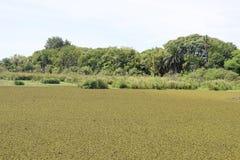 Bosque verde en el otro Foto de archivo libre de regalías