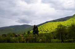 Bosque verde en el valle de Sadu Fotografía de archivo
