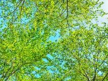 Bosque verde en fondo del cielo azul en un día soleado Fotografía de archivo