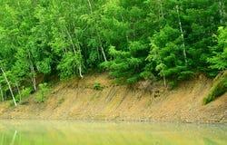 Bosque verde en la cuesta del banco Fotos de archivo libres de regalías