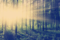 Bosque verde en la puesta del sol Fotos de archivo libres de regalías