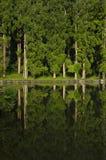 Bosque verde en la reflexión Foto de archivo