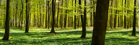 Bosque verde en resorte