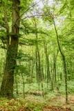 Bosque verde en Salzburg fotografía de archivo libre de regalías
