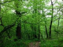 Bosque verde en Sochi Fotos de archivo