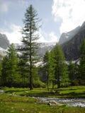 Bosque verde encantado Fotografía de archivo libre de regalías