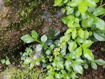 Bosque verde fresco Fotografía de archivo