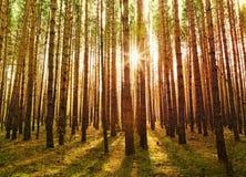 Bosque verde hermoso Fotografía de archivo