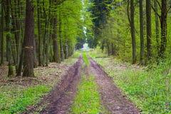 Bosque verde hermoso de la primavera Fotografía de archivo libre de regalías