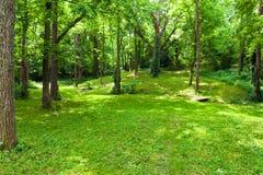 Bosque verde hermoso en el día de verano soleado. Imágenes de archivo libres de regalías