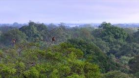 Bosque verde hermoso en un paisaje rural almacen de metraje de vídeo