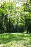 Bosque verde joven Imagenes de archivo