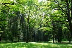Bosque verde joven Fotos de archivo