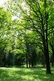 Bosque verde joven Fotografía de archivo