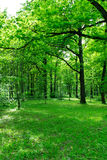 Bosque verde joven Imagen de archivo