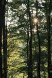 Bosque verde mágico Foto de archivo libre de regalías