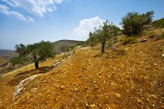 Bosque verde-oliva imagem de stock royalty free