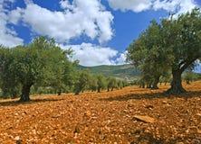 Bosque verde-oliva foto de stock royalty free