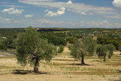 Bosque verde-oliva fotos de stock