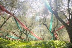 Bosque verde-oliva após a colheita imagens de stock