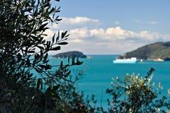 Bosque verde-oliva e jardim com opinião do mar imagem de stock