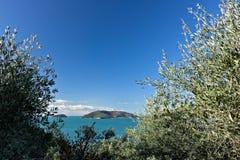 Bosque verde-oliva e jardim com opini?o do mar imagem de stock royalty free