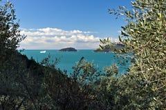 Bosque verde-oliva e jardim com opini?o do mar imagens de stock