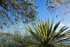 Bosque verde-oliva e jardim com opini?o do mar foto de stock