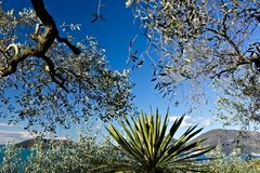 Bosque verde-oliva e jardim com opini?o do mar fotos de stock