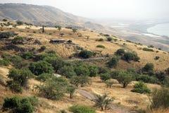 Bosque verde-oliva e lago imagens de stock