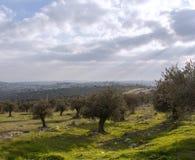 Bosque verde-oliva no fundo da cidade antiga imagem de stock