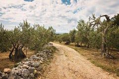 Bosque verde-oliva rural imagens de stock