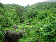 Bosque verde rico Fotografía de archivo