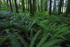 Bosque verde tropical Foto de archivo libre de regalías